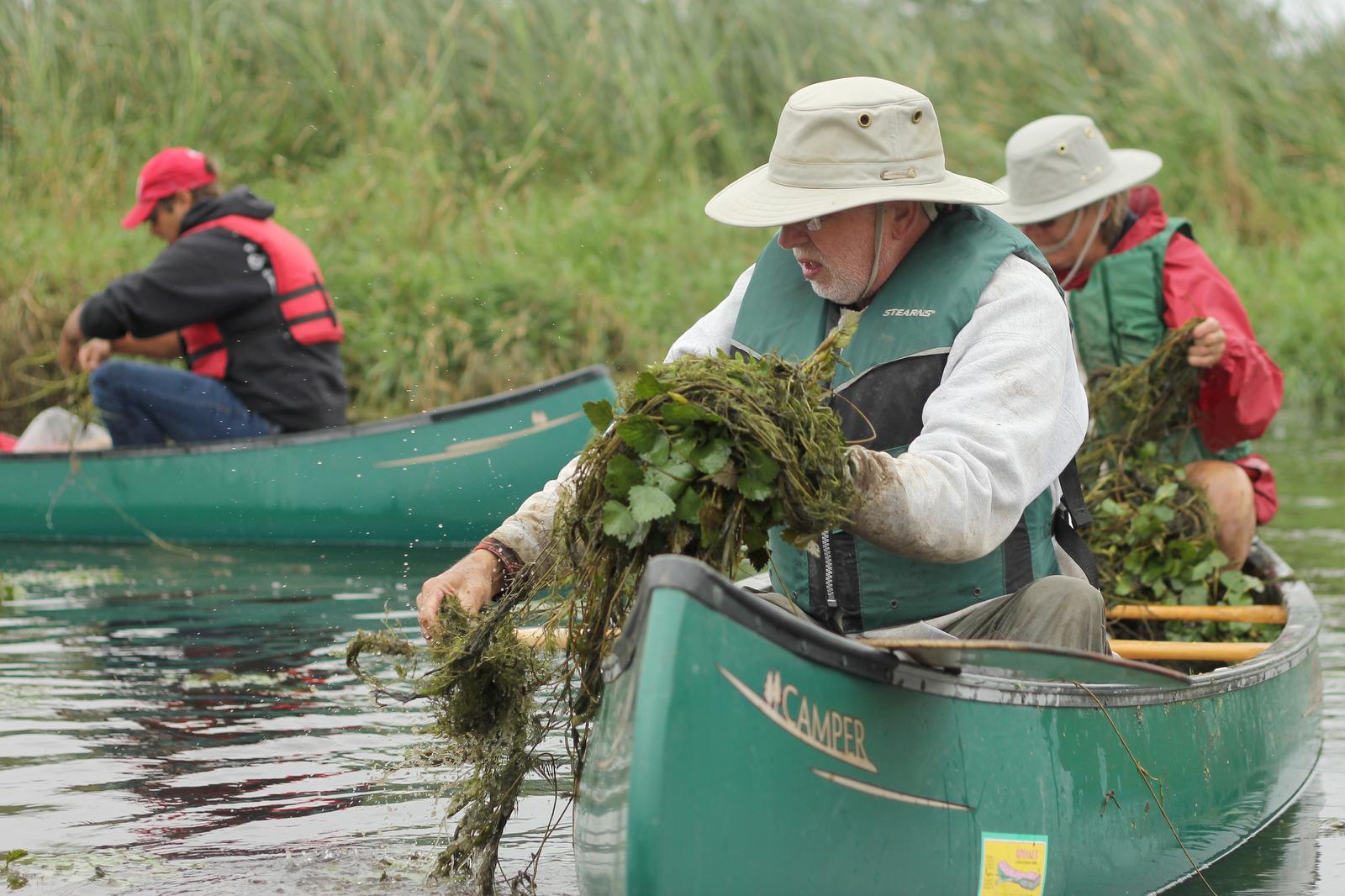 volunteers-water chestnut